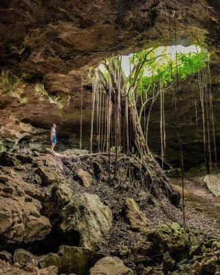 Caverna cin arbol de lianas saliendo al exterior